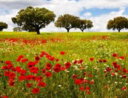 La llegada de la primavera , alergias y la pérdida de audición.